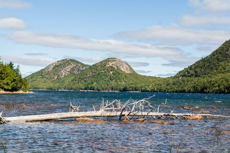evergreen trees: Evergreen trees on the coast of a lake in Maine