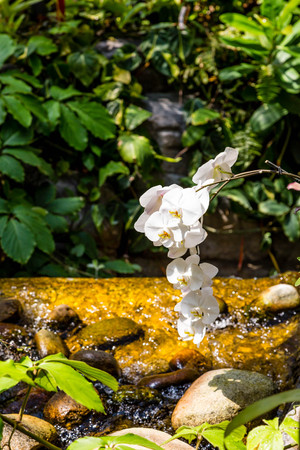 denver parks: Beautiful, colorful orchids in a public garden Stock Photo