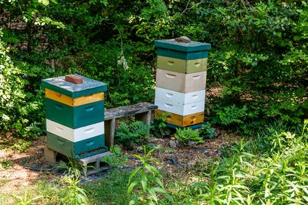 Colorful maisons bois d'abeilles dans une forêt Banque d'images - 39924943