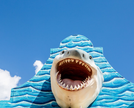 great: A great white shark mounted on a blue wall