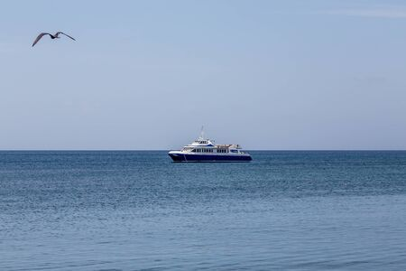 smal: A smal blue and white fishing boat moored in calm water with a seagull in flight