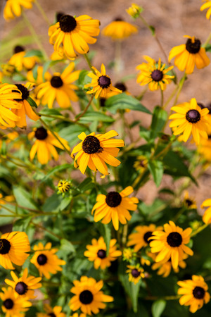 eyeing: Beautiful wildflowers growing in a summer garden Stock Photo