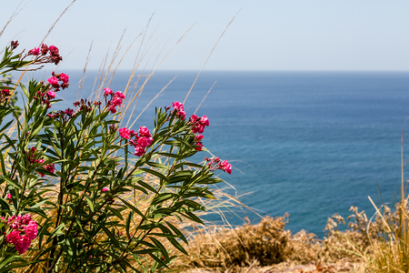 tree in landscape: Tropical flowers on a hill overlooking blue sea