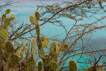 blue green background: Green cactus with blue ocean in background Stock Photo