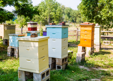 Colorful bee hives in a green meadow Stock Photo