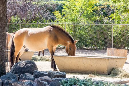 A brown horse drinking from a water trough