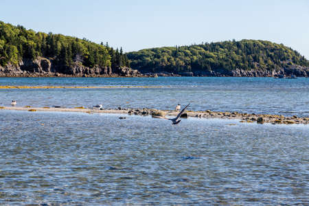 tide: Low Tide with tidal pools near Bar Harbor Maine
