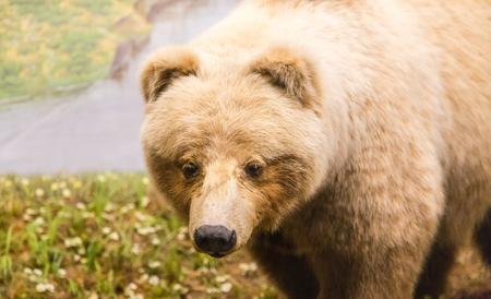 kodiak: Kodiak Bear Close by river
