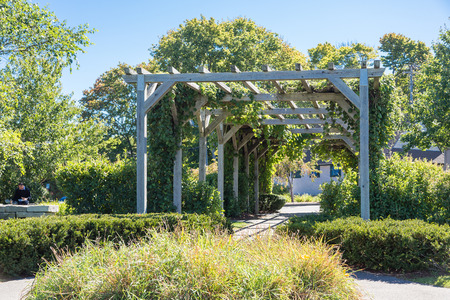 arbor: Old Wood Arbor with Grapes in a garden