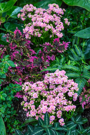 Pink and Purple Flowers on Green Foliage