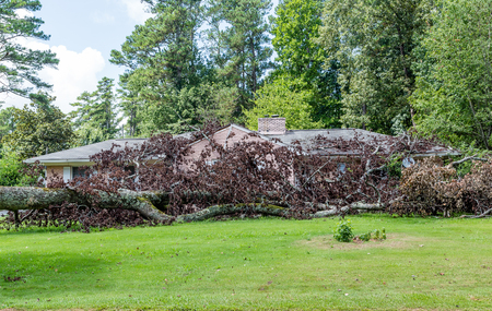 storm damage: Huge tree fallen on a home causing storm damage