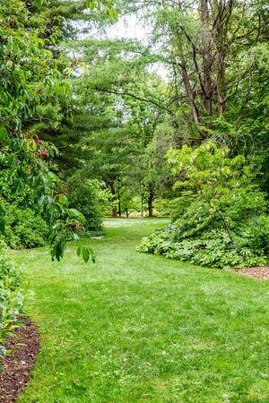 Pathway through a lush green public park