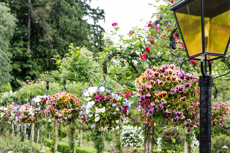Hanging baskets in a garden with a traditional lamppost Stock Photo