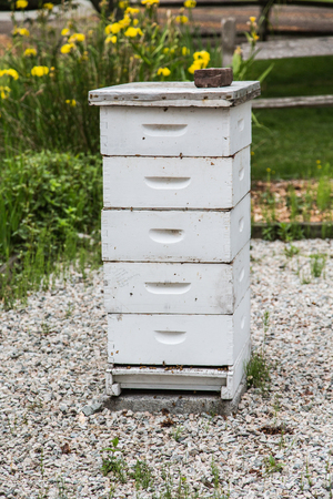 Old Wood Bee Hive in Garden
