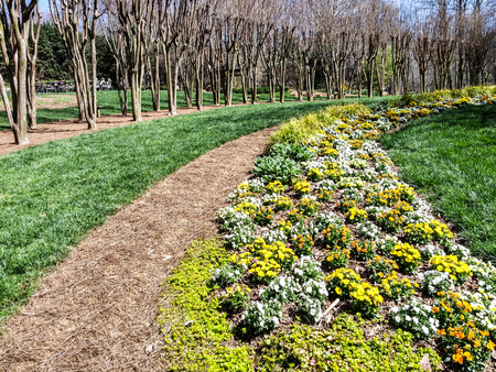 Pansies in Curving Lines of Landscaped Garden