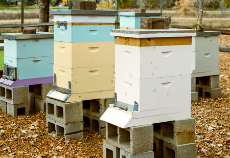 Colorful Wood Beehives in Autumn Stock Photo