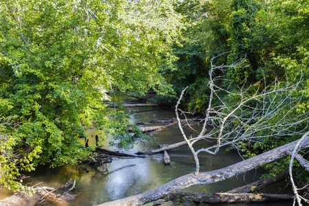 Trees Down Across Small Stream in Forest