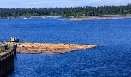 Logging Operation Near Dock
