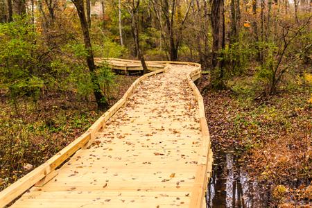 New Wood Trail in Fall