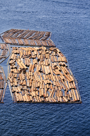 Logs Tethered Together in Harbor Imagens