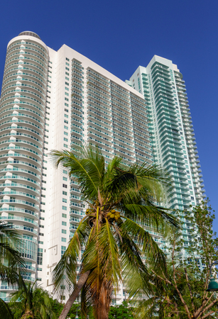 Palm Trees by High Rise Luxury Miami Condo Tower