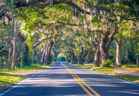 Road Through Oak Trees Stok Fotoğraf