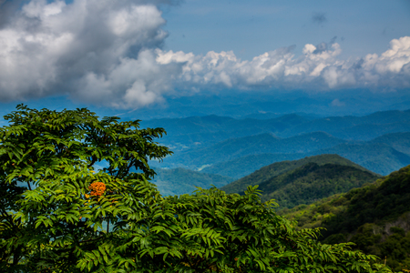 Blue Ridge Beyond Mimosa Tree Фото со стока