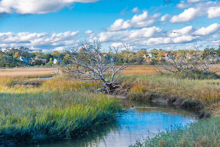 Stream Through Saltwater Marsh Фото со стока - 115821240
