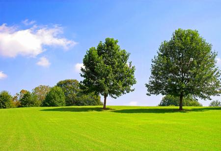 Two Trees on Hill Фото со стока
