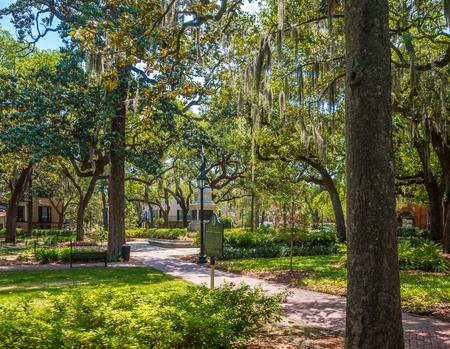 Savannah Park Under Oaks