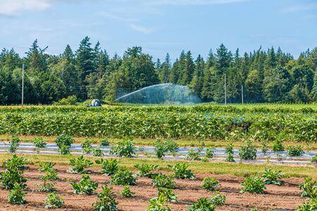 Irrigating a Flower Farm