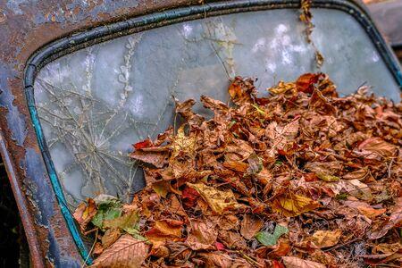 Leaves on Broken Windshield in a Junkyard Banco de Imagens