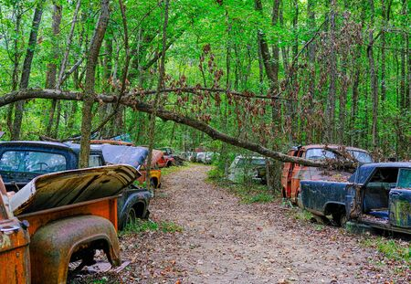 Trail Through Wrecked Cars in the Forest