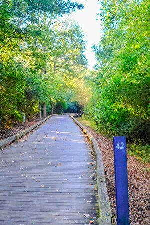 4.2 Mark on Woodland Fitness Trail in Early Fall Stock Photo
