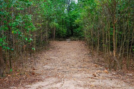Path Cleared Through Forest to Sewer