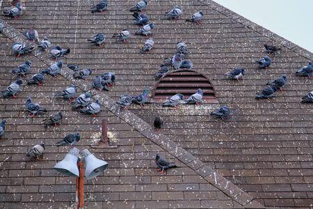 Pigeons Roosting on Roof Banco de Imagens