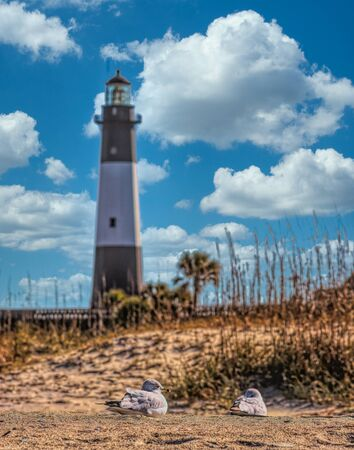 Tybee Lighthouse and Seagulls in Sand under Nice Sky Stock fotó - 135503528