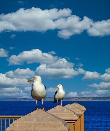 Two Gulls Keeping Watch on a Coastal Railing