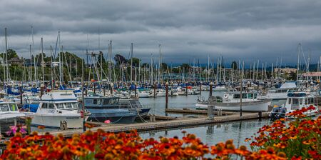 Marina Past Flowers on Stormy Day