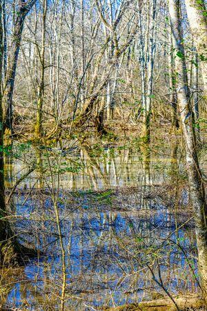Flooded Wetland Marsh