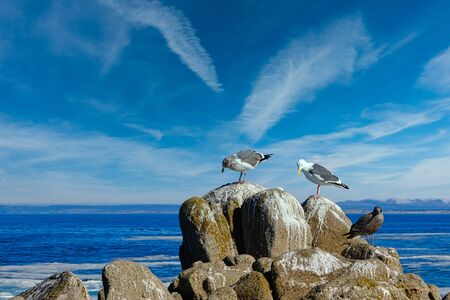 Three Gulls on Rocks