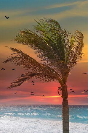 Palm Tree on Beach at Sunset Banco de Imagens