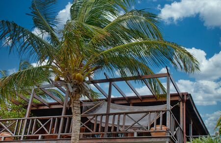 A hammock on a wood deck by a coconut plam tree