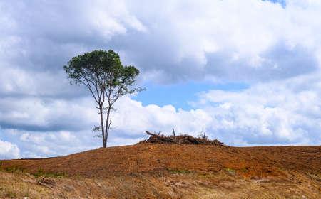 Lone Tree on a Bare Hill Фото со стока