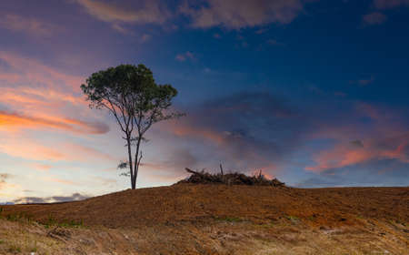 Lone Tree on a Bare Hill at Dusk