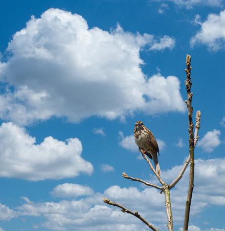 Hawk sitting on a bare tree Фото со стока