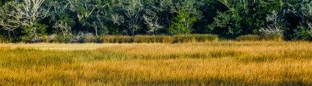Golden Marsh Grasses Фото со стока