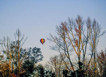 Hot Air Balloons Through Winter Trees