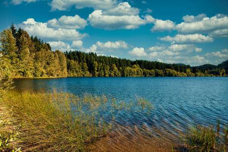 Evergreens Around Peaceful Lake