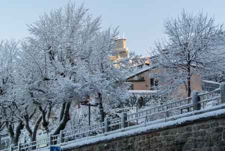 beautifu: a view of beautifu  trees and white snow